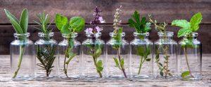 Les fleurs, épices, plantes et tisanes du bien-être @ Centre IFAPME  | Liège | Wallonie | Belgique